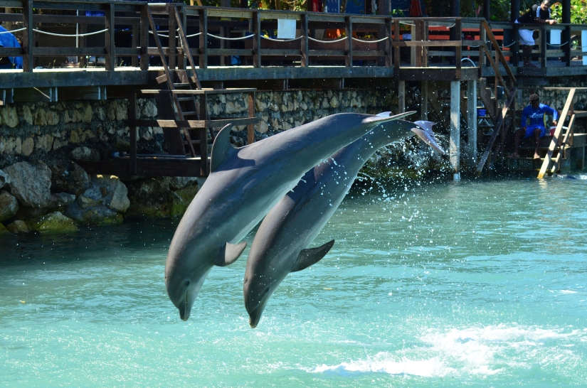 Dolphin Cove, MontegoBay
